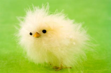 Spring Chick Gone Wild