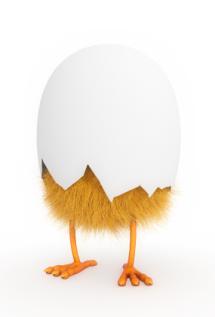 Half-hatched Chick 1