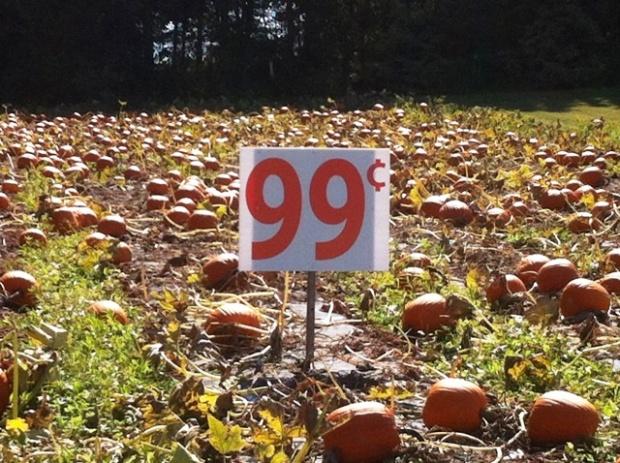 pumpkin_patch_elengrey_september_2012