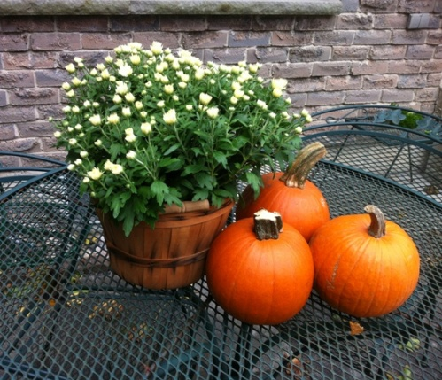 white_mum_pie_pumpkins_elengrey_october_2012