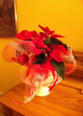 poinsettia_elengrey_november_2012