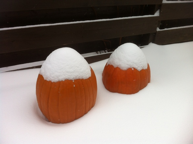 snow_pumpkins_1_elengrey_december_2012