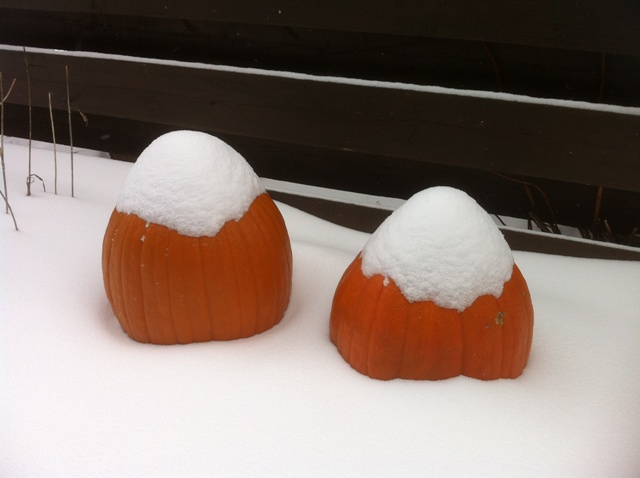 snow_pumpkins_2_elengrey_december_2012