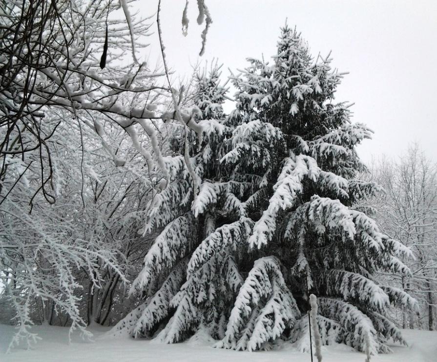 20130227_091956_winter_trees_dg_elengrey_february_2013
