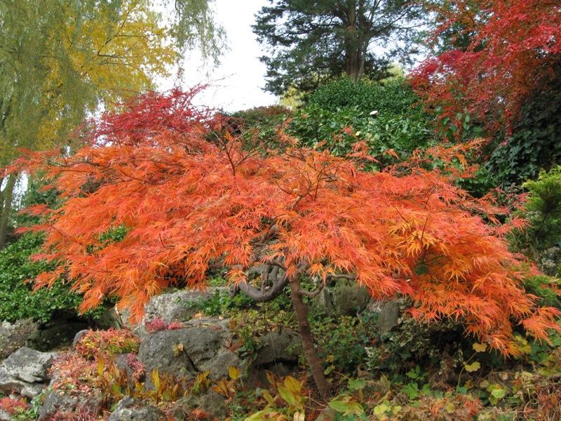 IMG_0365_edwards_gardens_elengrey_october_2009
