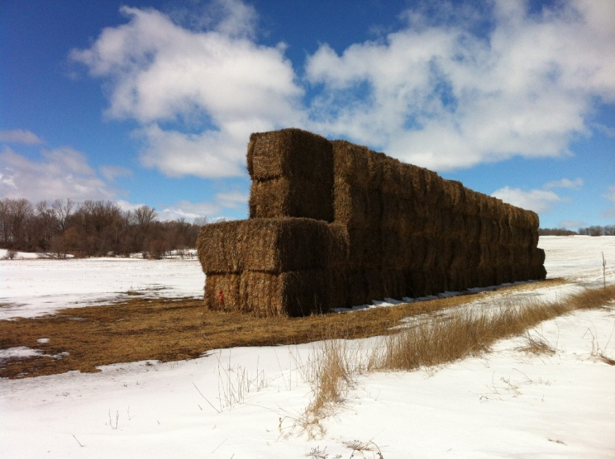 hay_bales_2_elengrey_march_2013