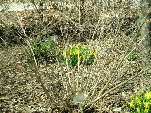 IMG_3901_peeping_yellow_elengrey_april_2013 (1280x960)
