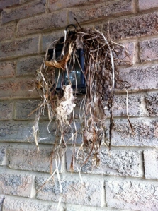 nest_2_elengrey_april_2013 (956x1280)
