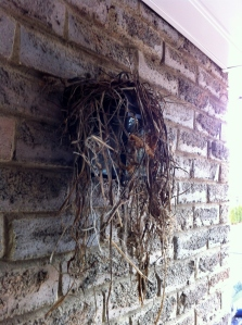 nest_3_elengrey_april_2013 (956x1280)