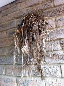nest_3a_elengrey_april_2013 (956x1280)