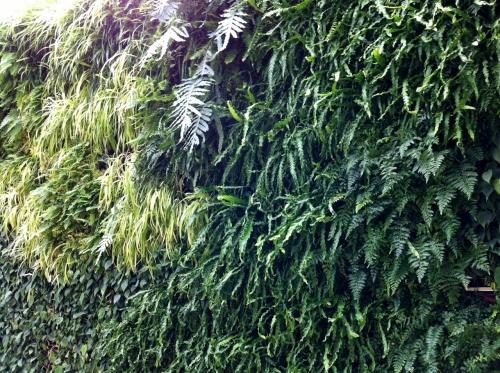 green_wall_2_longwood_gardens_elengrey_may_2013 (1280x956)