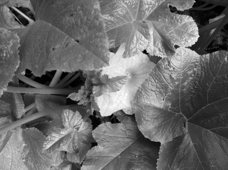 compost_vine_2_elengrey_august_2013 (1280x956)