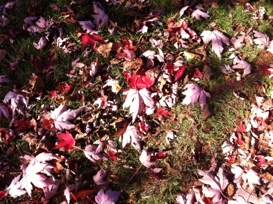 autumn_leaves_ontario_october_2013 (1280x956)
