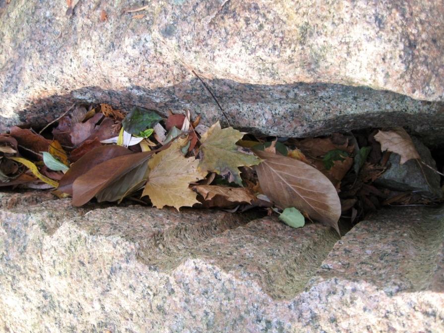 IMG_4479_autumn_crevice_november_2013 (1280x960)