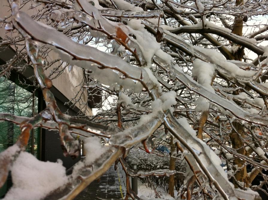 toronto_ice_storm_december_2013 (1280x956)