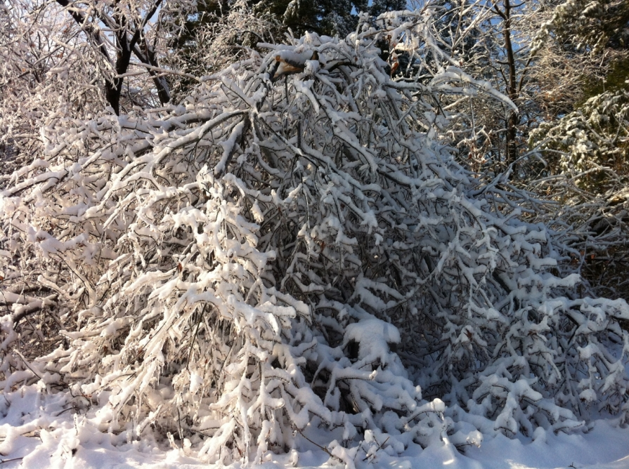 snow_on_ice_december_2013 (1280x956)
