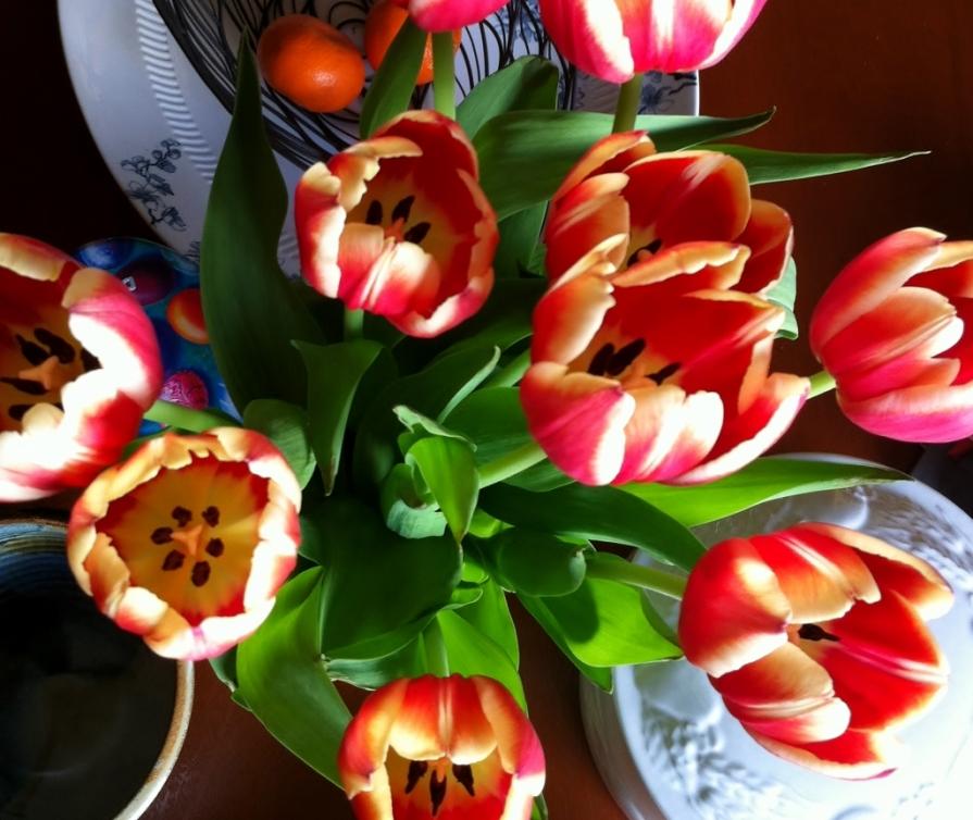 IMG_6178_table_tulips_elengrey_april_2014 (1024x863)