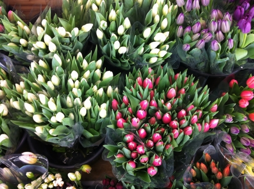 IMG_6190_market_tulips_elengrey_april_2014 (1024x765)