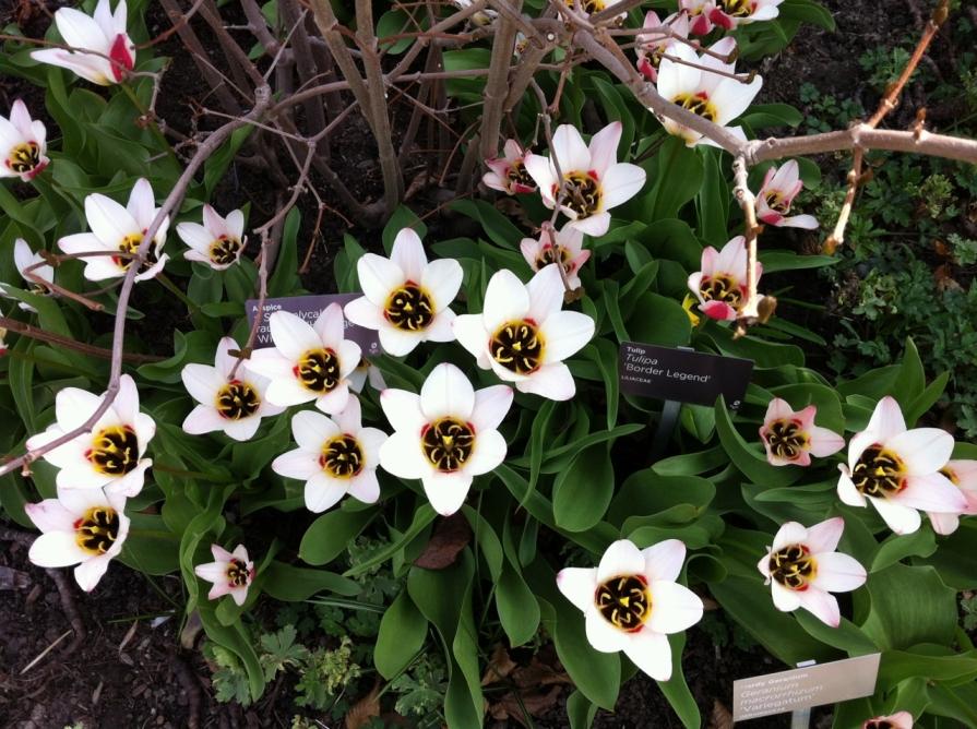 IMG_6334_the choir_edwards_gardens_elengrey_may_2014 (1280x956)