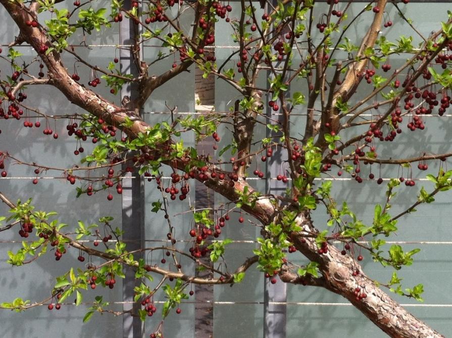 IMG_6338_berries_on_wall_elengrey_may_2014 (1024x765)