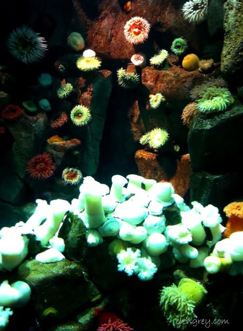 IMG_7616_anemones_elengrey_september_2014 (750x1024)