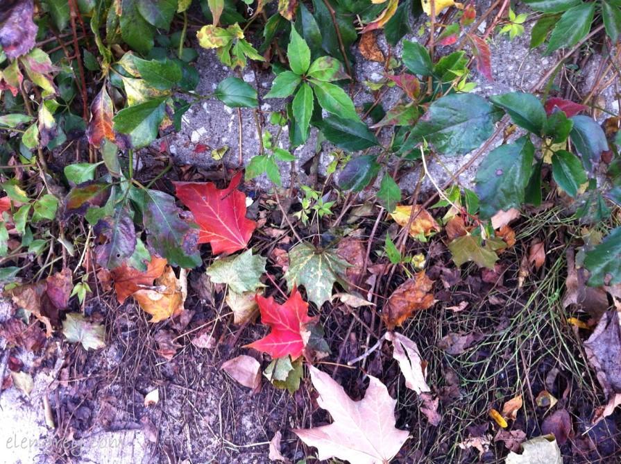 IMG_8141_autumn_sunday_3_october_2014 (1280x956)