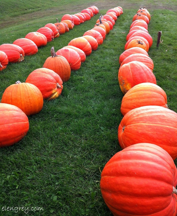 IMG_8243_row_pumpkins_october_2014 (1049x1280)