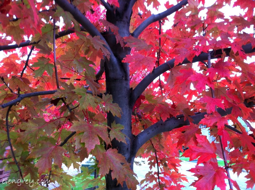 IMG_8299_barked_up_red_leaves_october_2014 (1280x956)