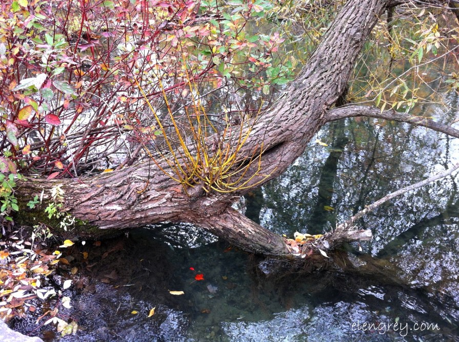 IMG_8334_sprouting_branch_october_2014 (1280x956)