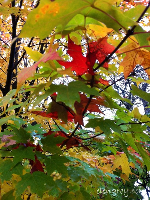 IMG_8574_autumn_peek_a_boo_elengrey_october_2014 (747x1000)