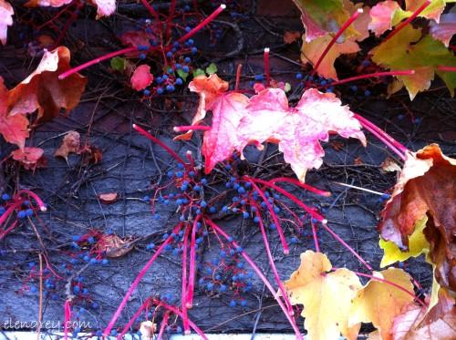 IMG_8590_autumn_on_wall_october_2014 (1280x956)