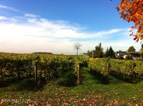 IMG_8753_vine_country_elengrey_october_2014 (1024x765)