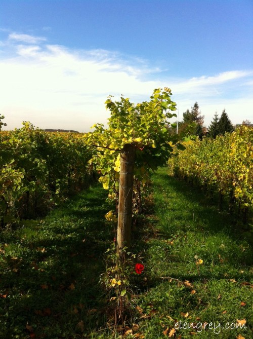 IMG_8759_vine_country_3_elengrey_october_2014 (765x1024)