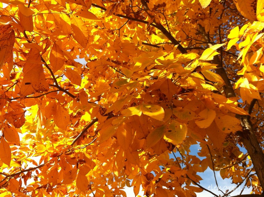 IMG_8825_golden_leaves_3_2014 (1280x956)