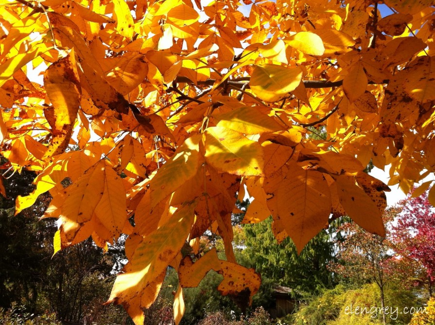 IMG_8830_golden_leaves_october_2014 (1280x956)