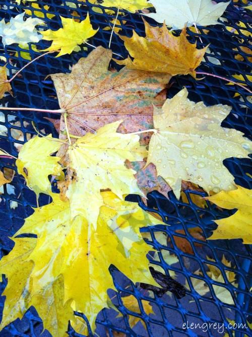 IMG_8936_transluscent_autumn_elengrey_november_2014 (956x1280)