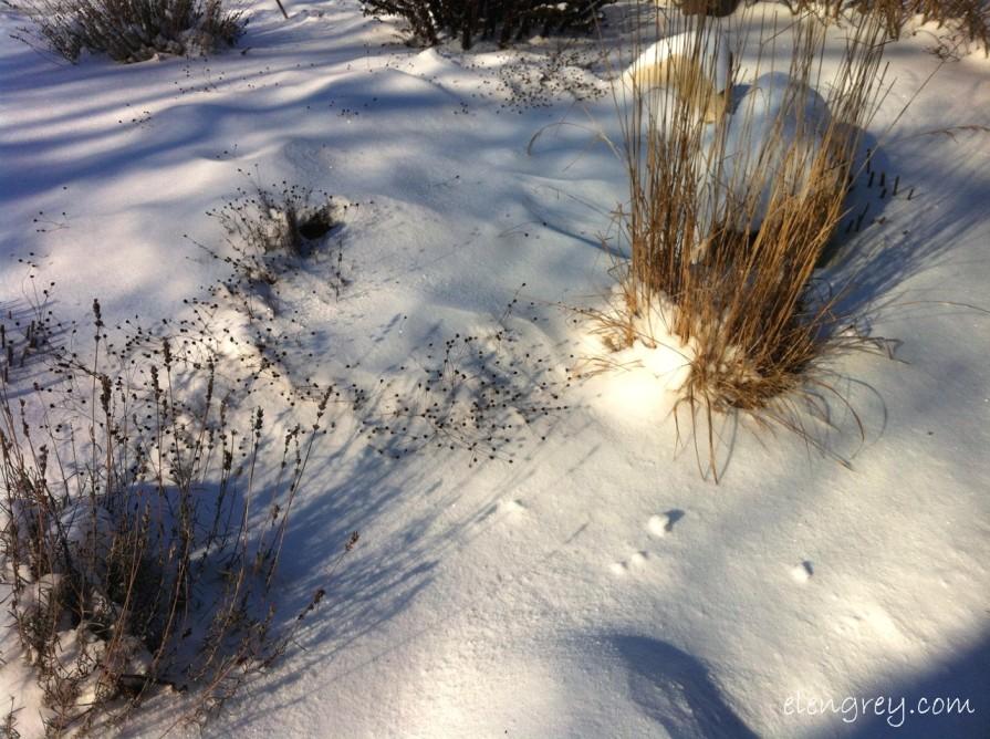 IMG_9455_snow_day_1_elengrey_january_2015 (1280x956)