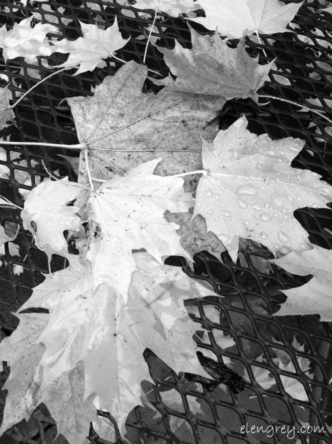 IMG_8936_transluscent_autumn_elengrey_november_2014 (956x1280) (2)