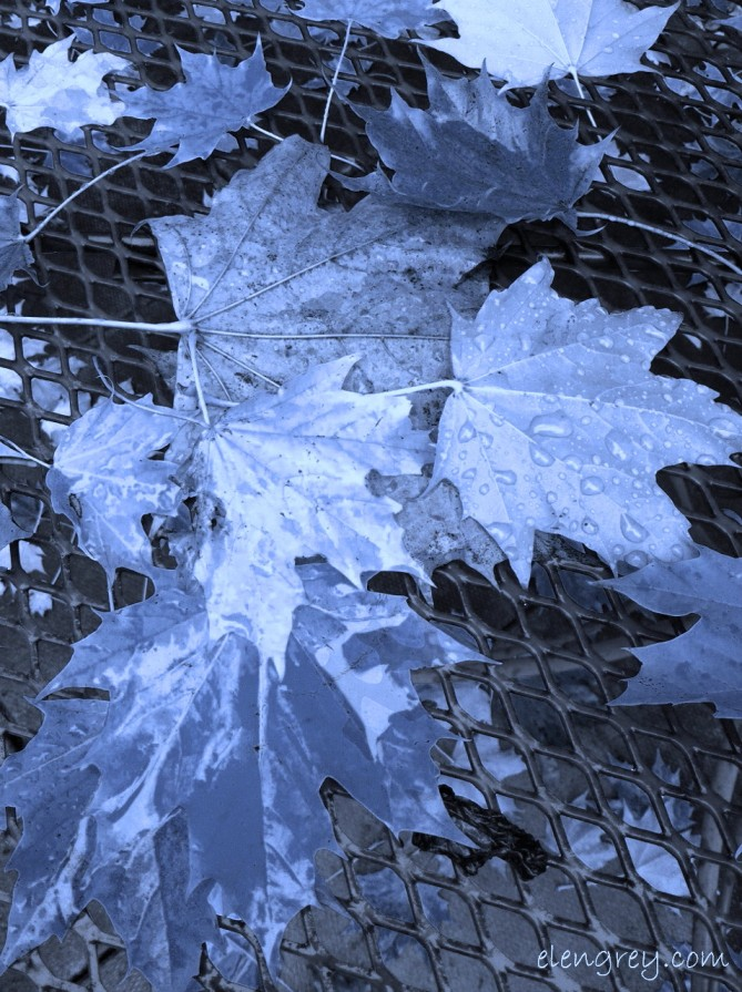 IMG_8936_transluscent_autumn_elengrey_november_2014 (956x1280) (3)