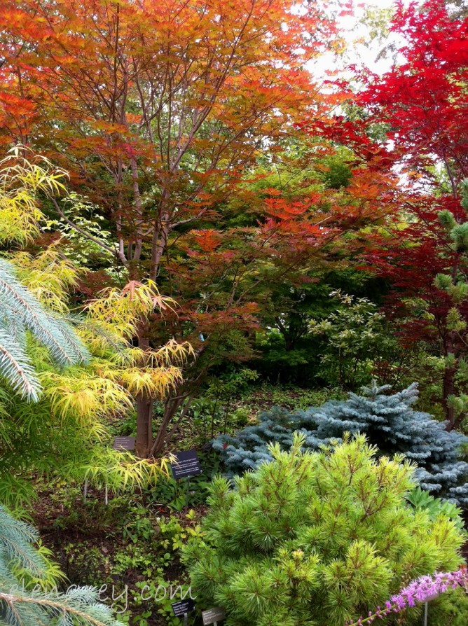 IMG_1437_looks_like_autumn_elengrey_august_2015 (956x1280)