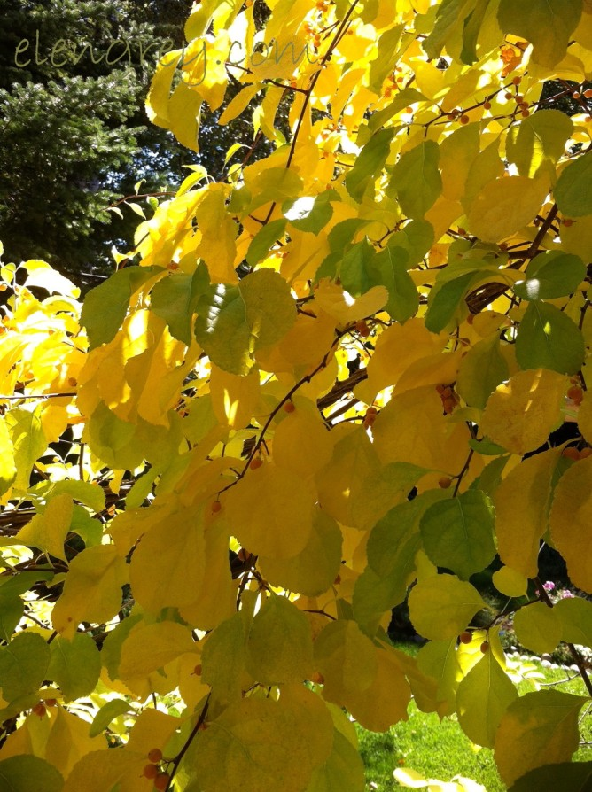 IMG_1836_autumn_vine_2_elengrey_september_2015 (956x1280)