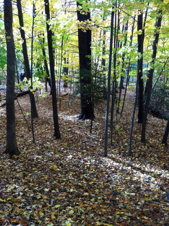 IMG_2067_trees_1_eg_elengrey_october_2015 (956x1280)
