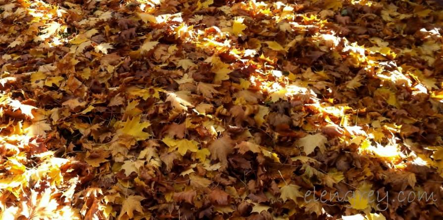 IMG_2120_ssm_autumn_leaves_2_elengrey_november_2015 (1280x639)