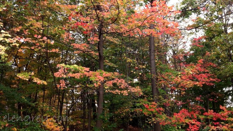 Eleventy Autumn 2013