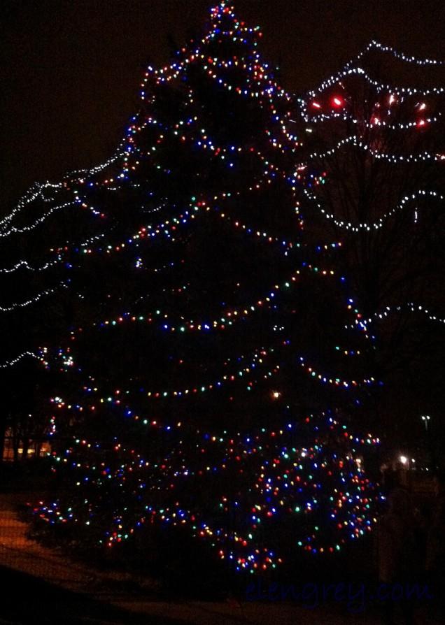 IMG_2218_tree_lighting_elengrey_december_2015 (910x1280)