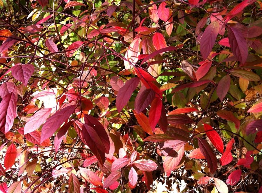 IMG_8821_aaaaah_foliage_elengrey_october_2014 (1280x944)