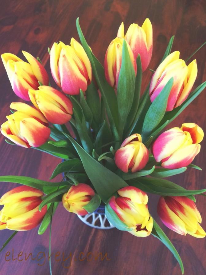 IMG_2902_tulip_haze_elengrey_april_2016 (960x1280)