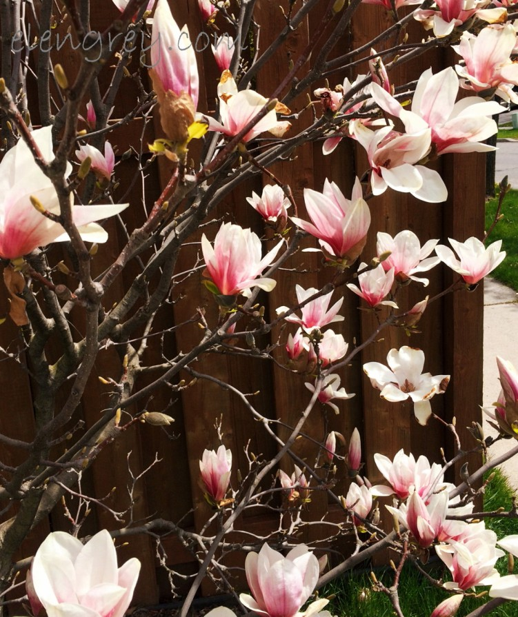blossoms_elengrey_may_2016 (1074x1280)