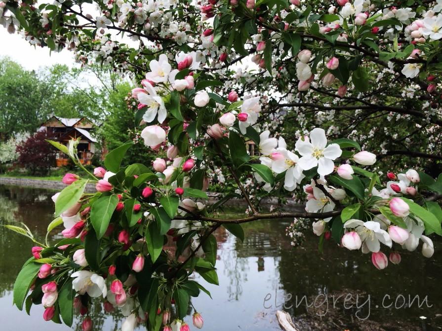 ottawa_tulip_festival_1_elengrey_may_2016 (1280x960)