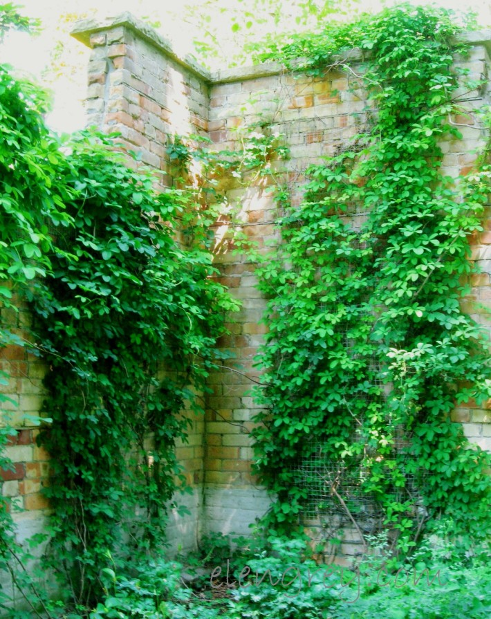 creeper_wall_2_elengrey_july_2014 (1015x1280)